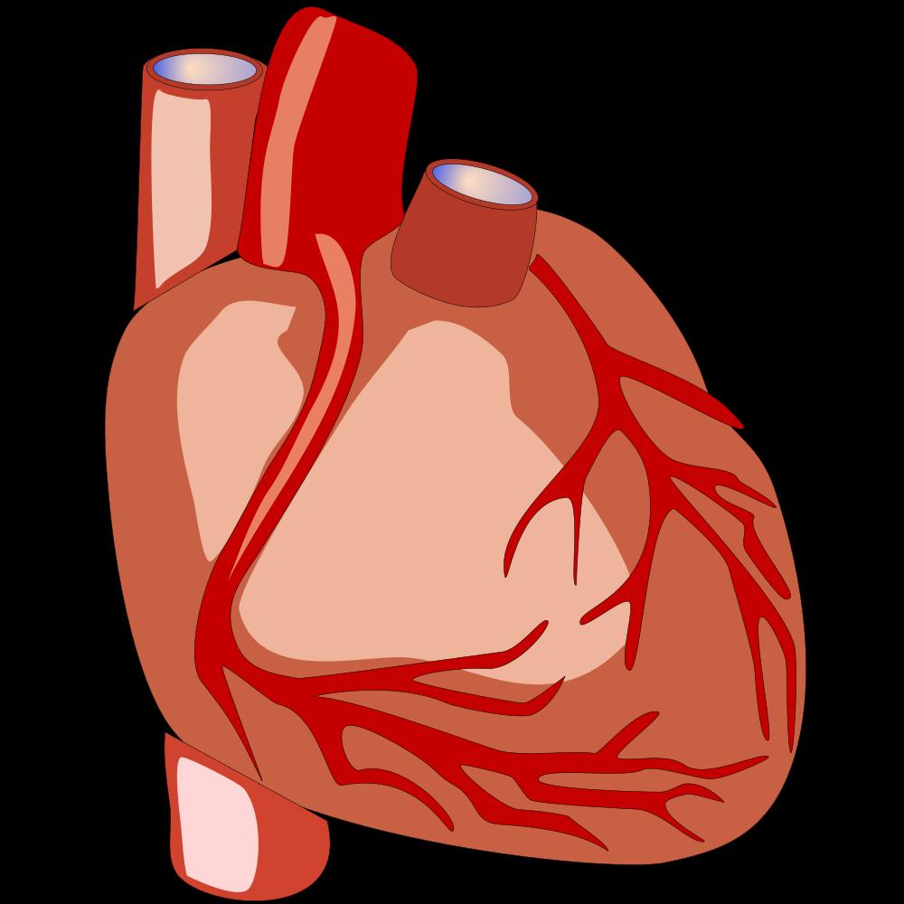 OnlineLabels Clip Art - Human Heart