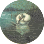 Circular swan drawing