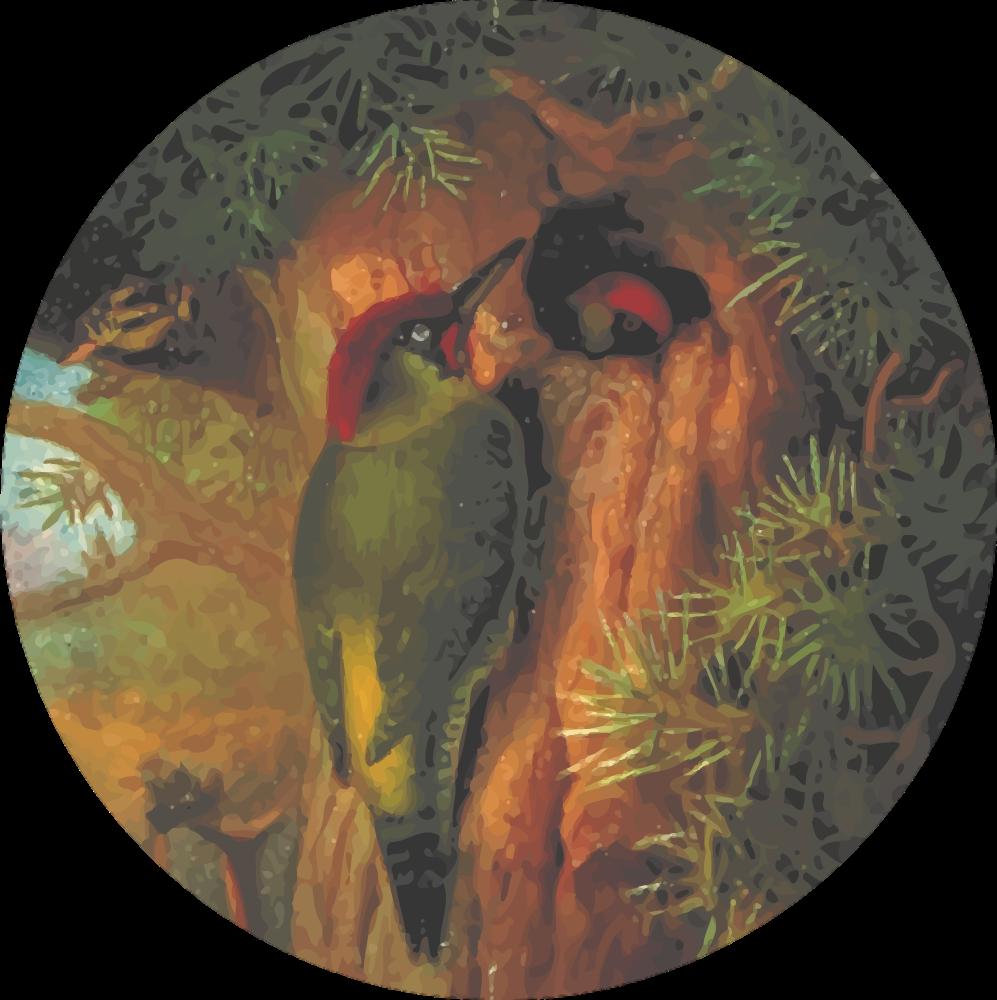 Circular woodpecker drawing