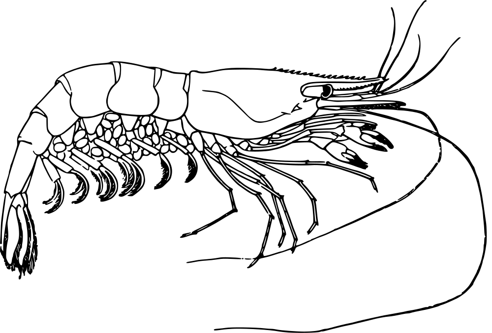Download Image As A PNG