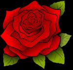 Rosa | Rose