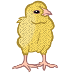 chick3 - coloured