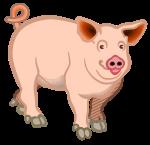 pig - coloured