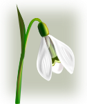 flowers_snowdrop