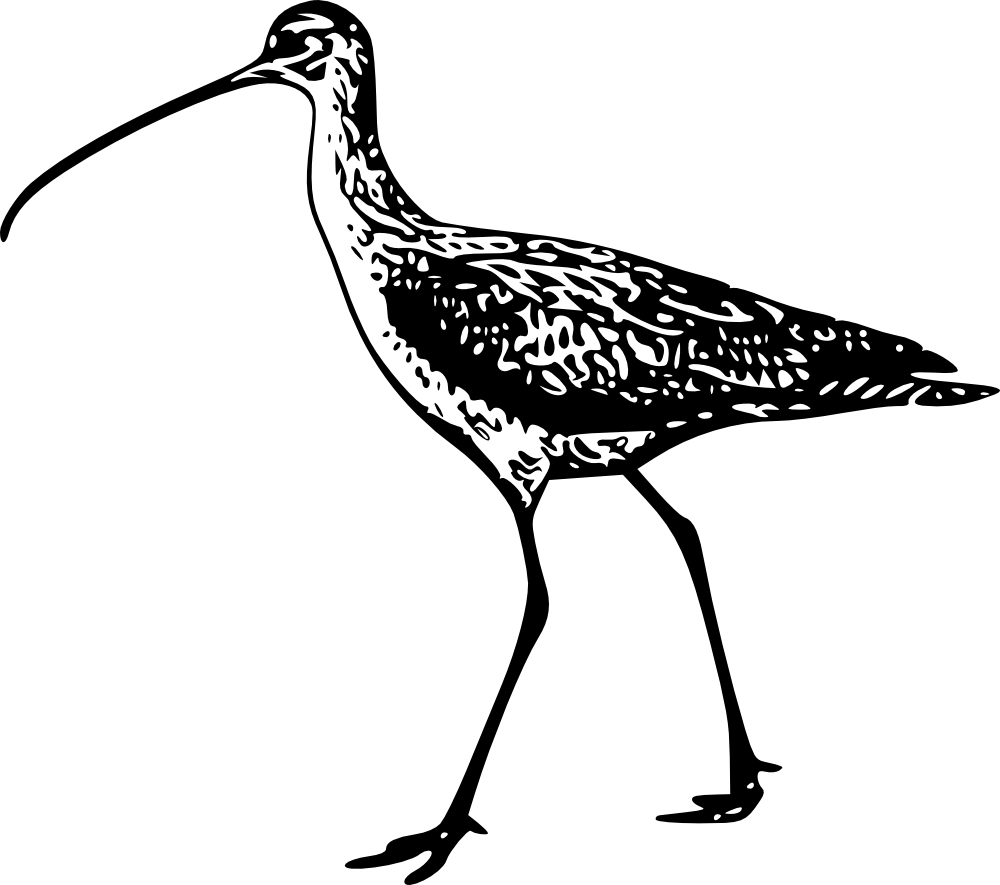 curlew chat Curlew started out as a challenge by a friend to design a boat aimed at the typical paddler for use in our local waters, the tennessee river and it's man made lakes.