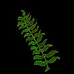Calligraphic Illustration- Leaf, Twig, Plant- 4