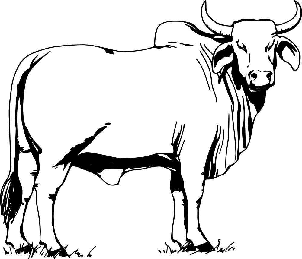 Carabao Clipart Black And White | www.imgkid.com - The ...