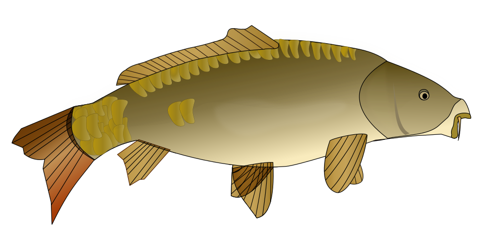 Onlinelabels clip art carpe poisson for Poisson carpe