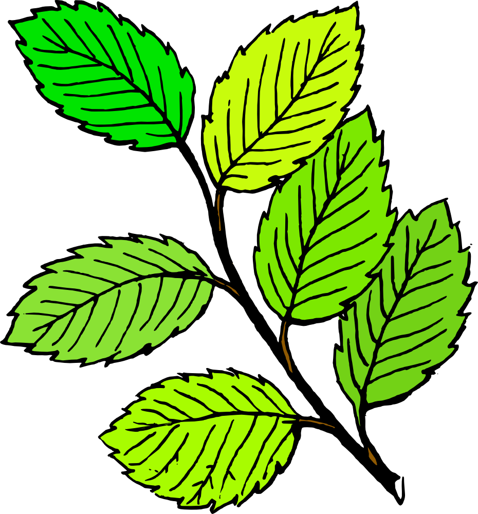 OnlineLabels Clip Art - Summer Leaves