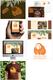 Orangutan Outreach Website, Logo, & Branding