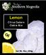 Southern Magnolia Lemon Coolers