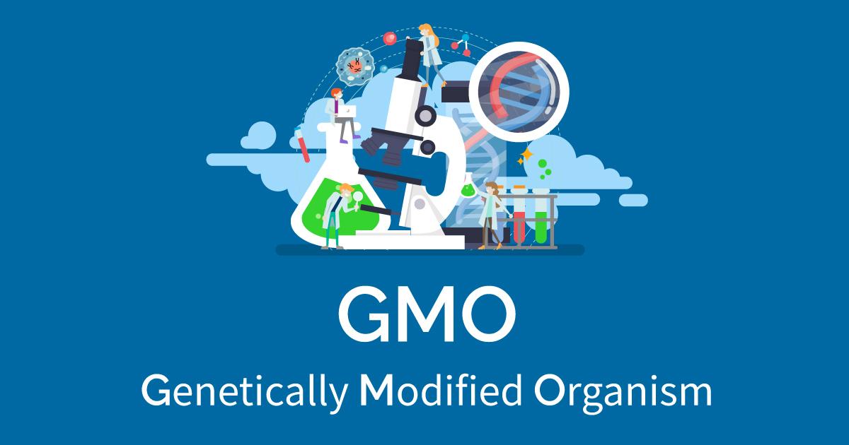 Definition of GMO acronym: genetically modified organism